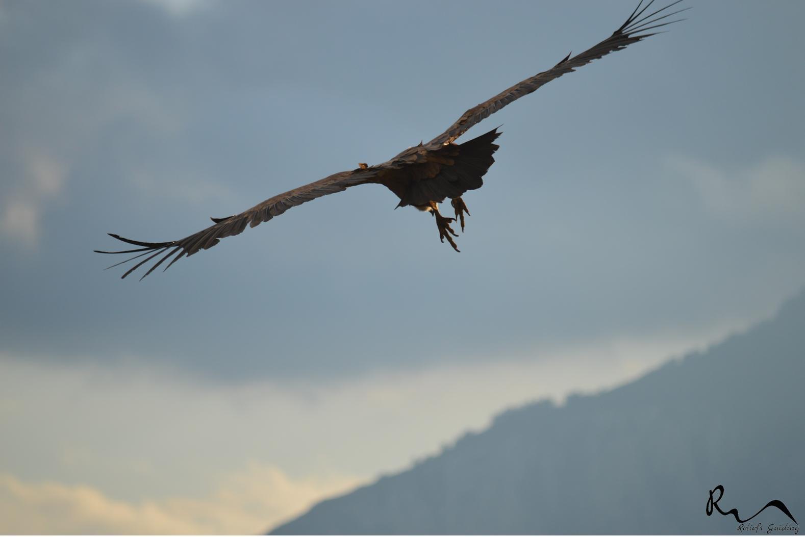 Photo Les vautours de la rive gauche