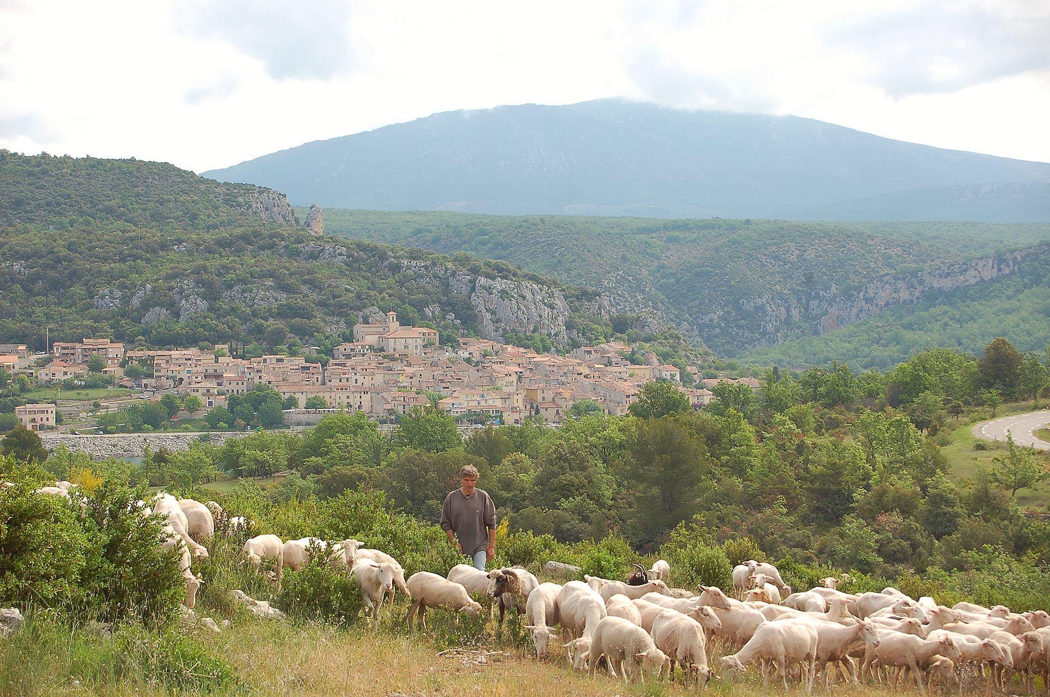 Photo L'agneau de Bauduen